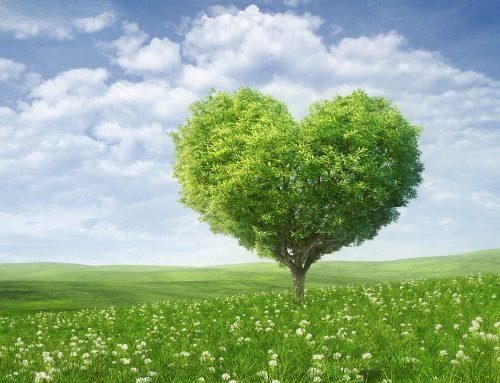 We ♥ de natuur
